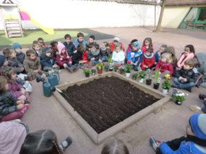 plantations fleurs dans la cour (2)