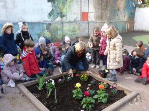 plantations fleurs dans la cour (5)