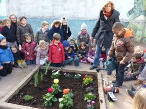 plantations fleurs dans la cour (6)