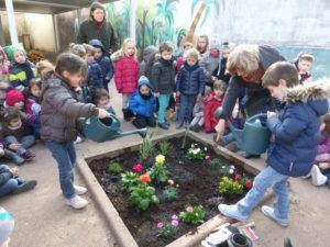 plantations fleurs dans la cour (7)